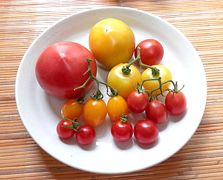 o-tomato-1.jpg