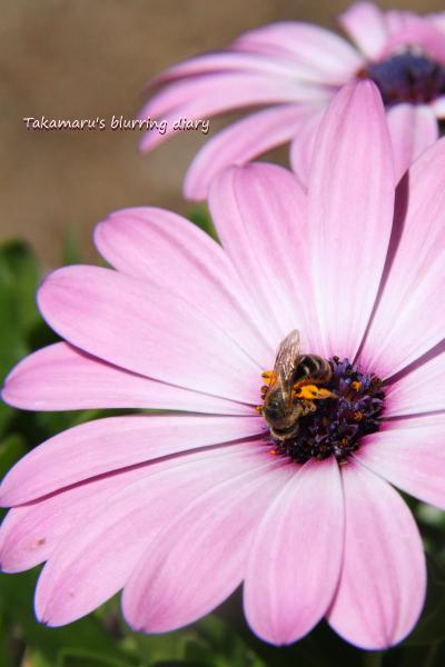 足に沢山の花粉を付けてました