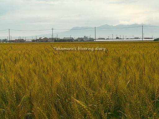 麦畑と赤城山です