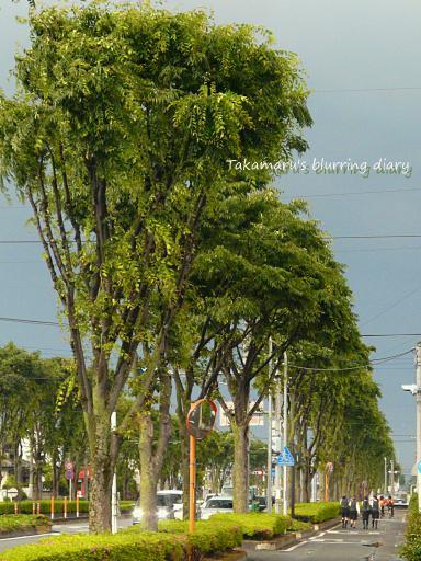 薄黒い雲と緑が印象的でした