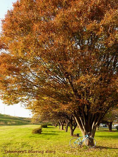 良い雰囲気の大木でした。