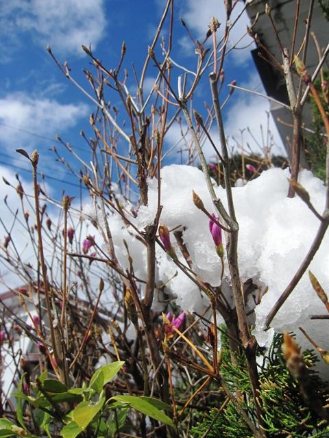4月の大雪4