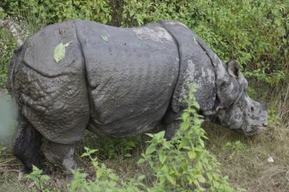 chitwan-nepal_14-11-08-0250.jpg