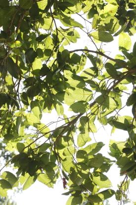 chitwan-nepal_14-11-09-0168.jpg