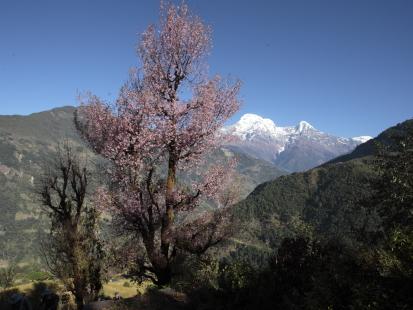 dhampu-nepal_14-11-12-0277.jpg