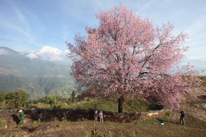 dhampu-nepal_14-11-13-0235.jpg