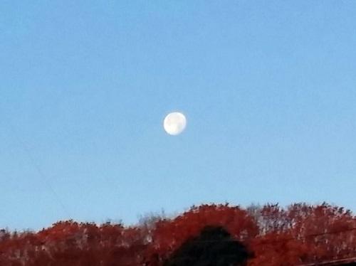 明けの月 煌々と!