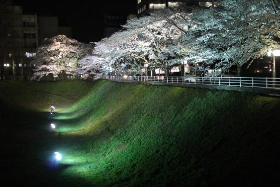 幻想的なお堀の桜