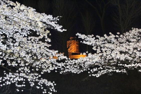 桜と旧県庁