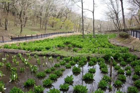 湿性生態園