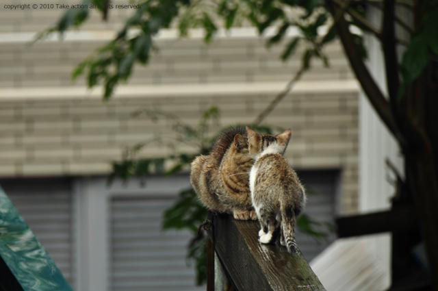 2011・8・16写真合宿1日目猫5