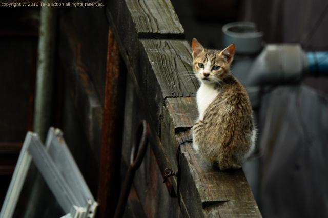 2011・8・16写真合宿1日目猫4