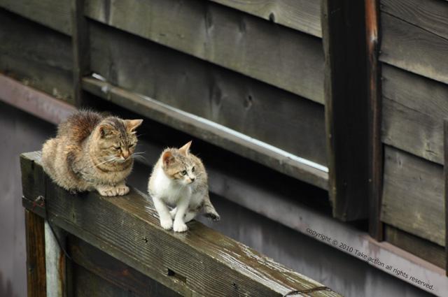 2011・8・16写真合宿1日目猫6