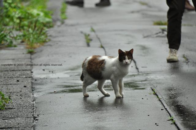 2011・8・16写真合宿1日目猫2