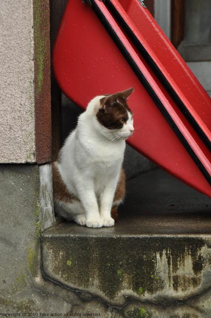 2011・8・16写真合宿1日目猫1