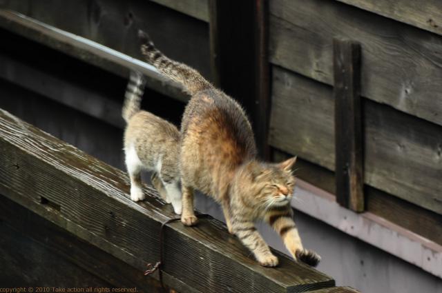 2011・8・16写真合宿1日目猫7