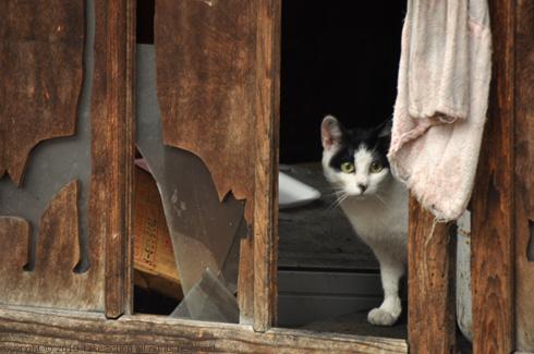 2011・8・16写真合宿1日目猫8