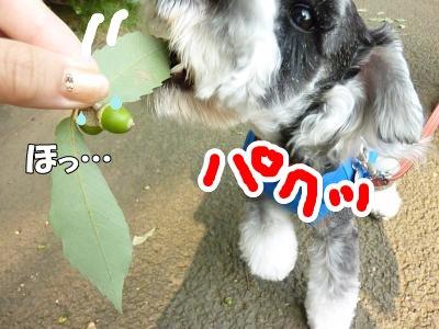 9_10+022_convert_20110910094857.jpg