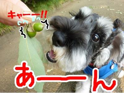 9_10+025_convert_20110910094813.jpg