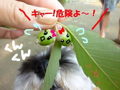 9_10+031_convert_20110910095039.jpg