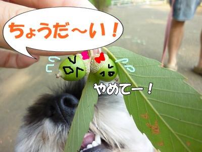 9_10+032_convert_20110910103646.jpg