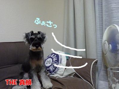 9_12+007_convert_20110912114454.jpg