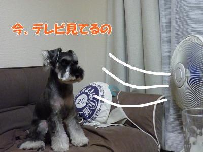 9_12+010_convert_20110912114532.jpg