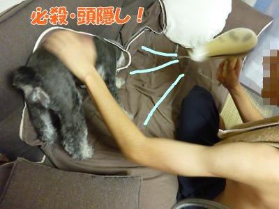 9_5+015_convert_20110905100113.jpg