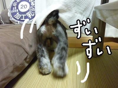 9_5+042_convert_20110905110919.jpg