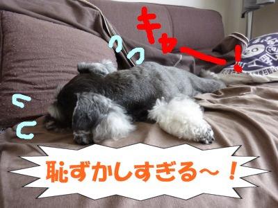 9_6+004_convert_20110907104123.jpg