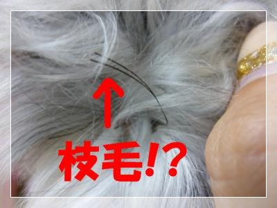 9_6+012_convert_20110906205439.jpg