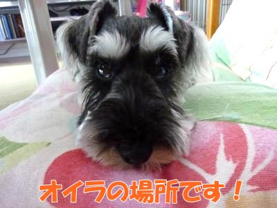 9_8+036_convert_20110908151058.jpg