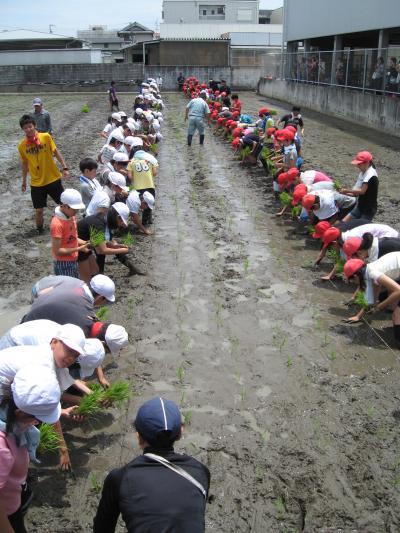 学童農園③
