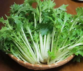 広茎ミズナ収穫物