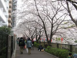 引き続き川の両側に遊歩道が続く。