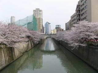 田道橋から下流方向を見る。正面のグレーの建物は目黒雅叙園アルコタワー。