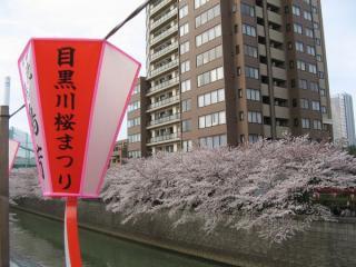 桜の開花時期に川沿いに吊り下げられる飾り。