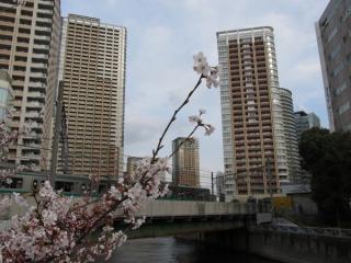 下流方向には大崎駅前の高層マンション・ビル群が見渡せる。