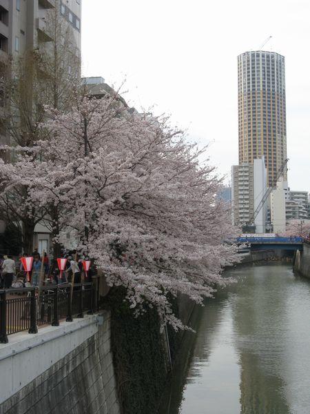 田楽橋から中目黒駅方向を見る。正面の高い建物は賃貸マンションの中目黒アトラスタワー(撮影当時はまだ工事中)。