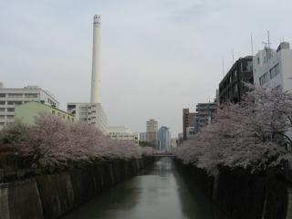 なかめ公園橋から下流方向を見る。左の煙突は目黒清掃工場。