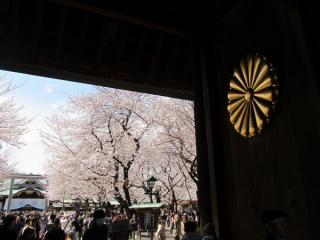 靖国神社神門の菊の御紋と境内の桜