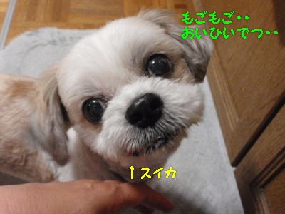 P7041592.jpg