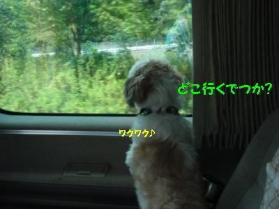 P8150032.jpg