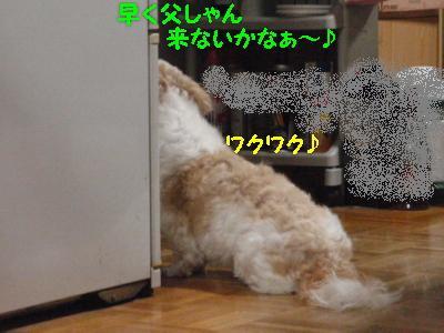 PA150284.jpg