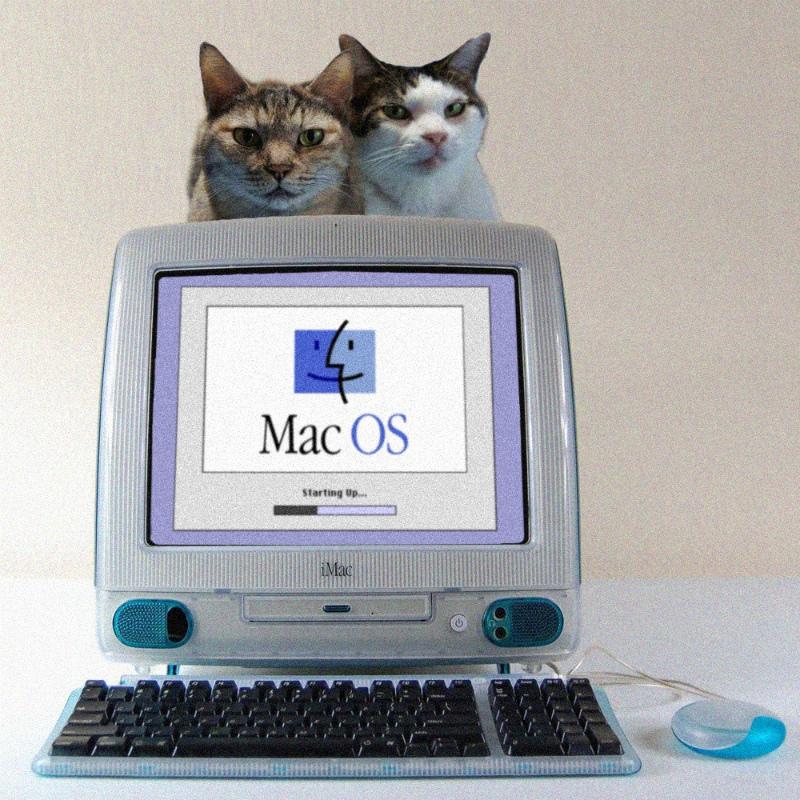 233iMac-Cats.jpg