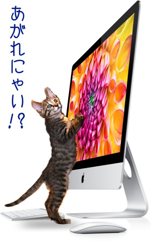 NEW-iMac-NO-Cat.jpg