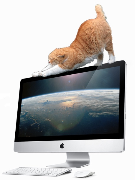 iMac-On-The-Cat.jpg