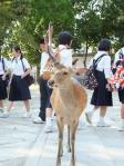 修学旅行生たちと鹿