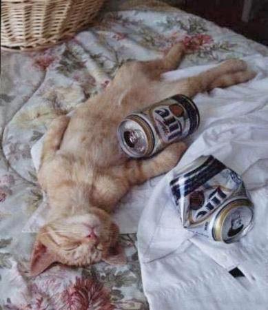 飲み疲れた猫