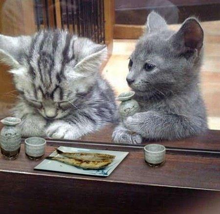 ショックを慰める猫